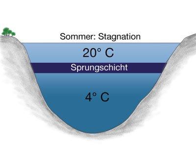 Sommerschichtung eines Gewässers - Sprungschicht