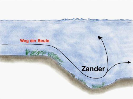 Buhne-Stroemung-Zander