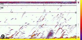 S00054-Echolotbild-Interpretation-Humminbird-Helix-kleine-Kopie