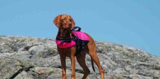 test-schwimmweste-schwimmhilfe-hunde