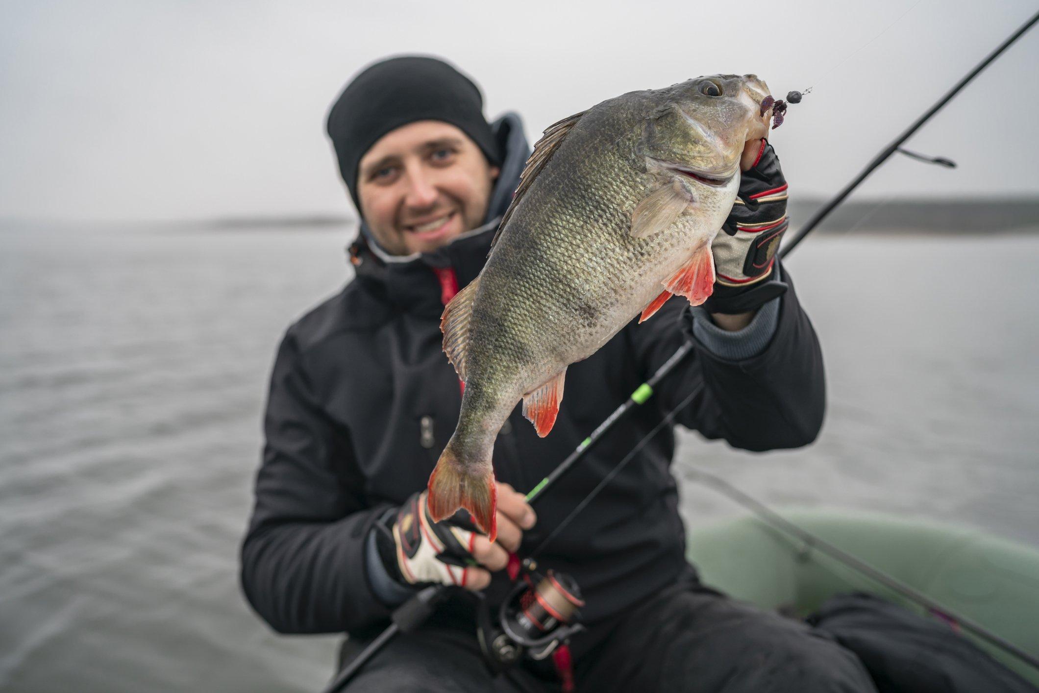 Barschbuch - große Barsche angeln im Frühjahr - die besten Köder