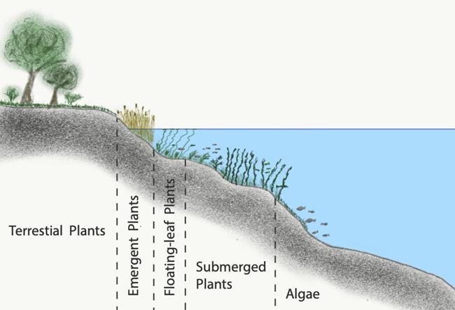 hecht-lebensraum-habitat-see